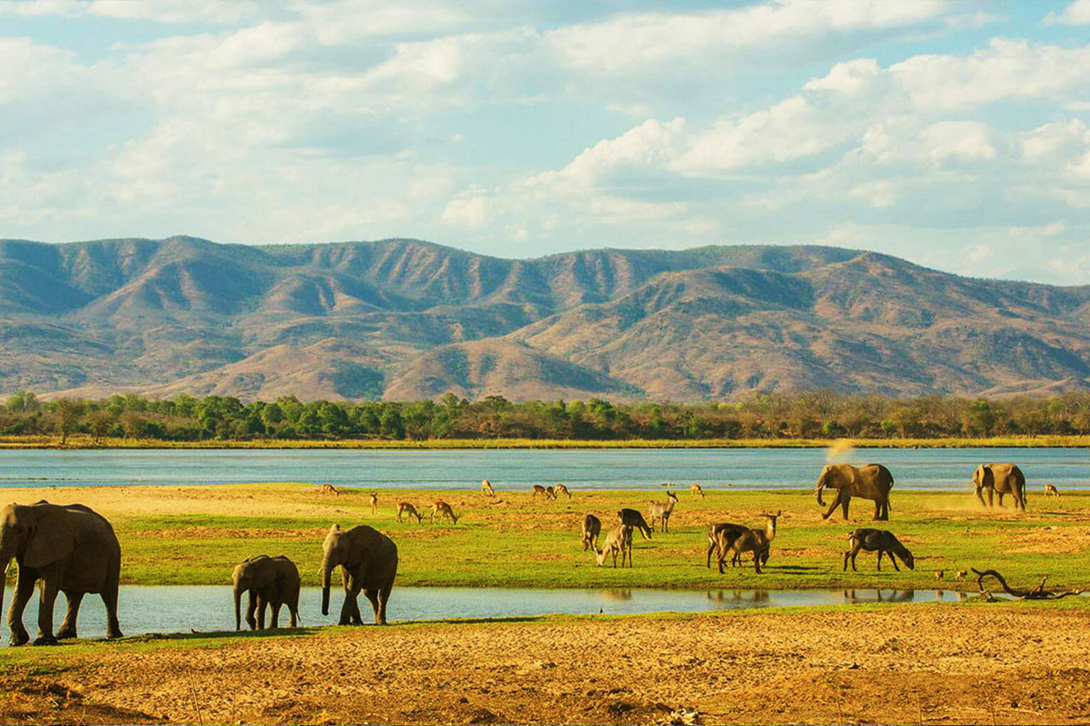 Photo Zambie