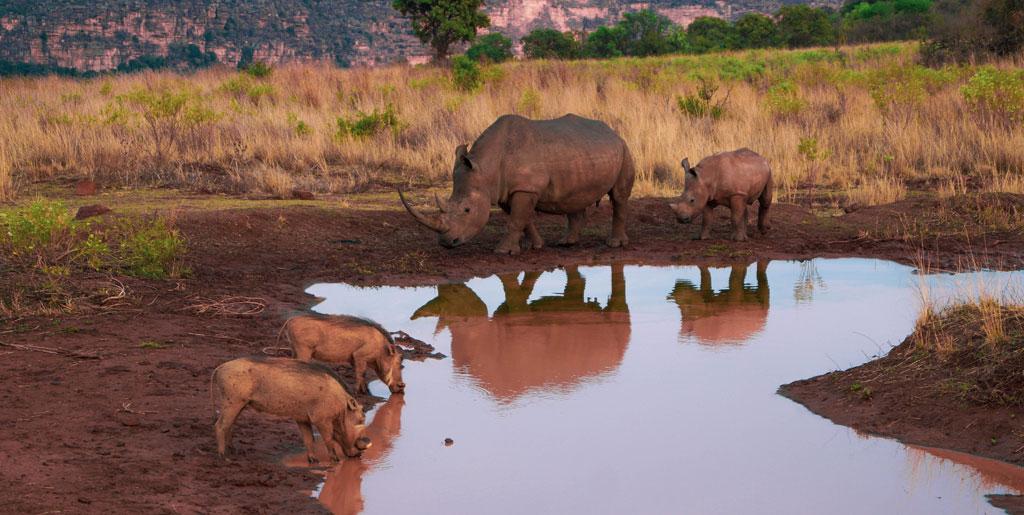 Voyage safari Afrique