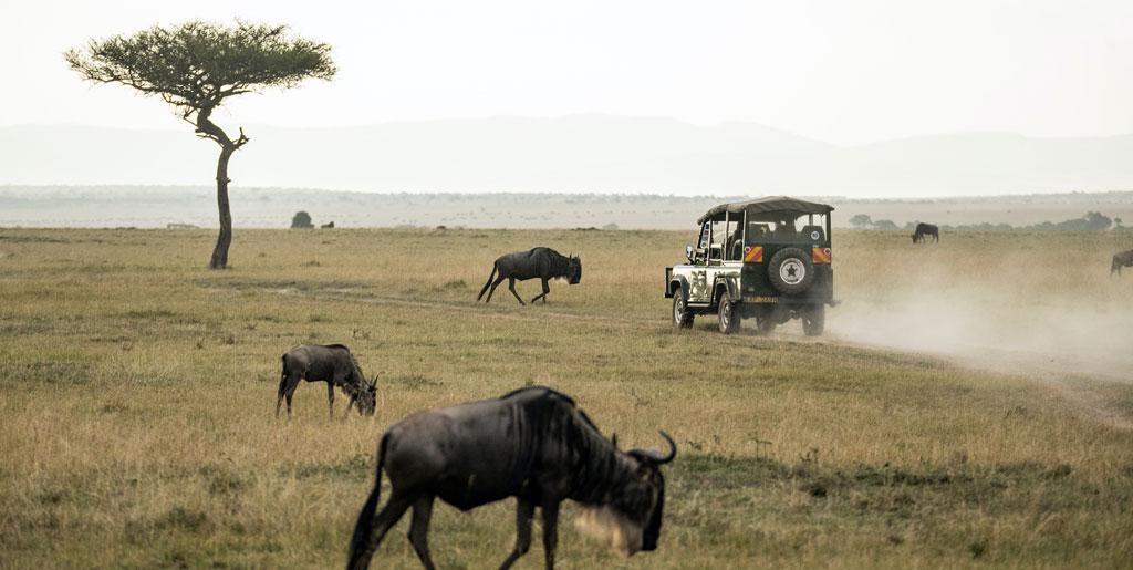 Voyage Safari Kenya